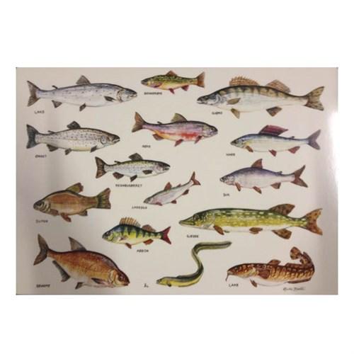 saltvannsfisk arter i norge
